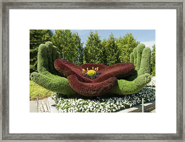 In Flanders Field The Poppy Symbol Of Remembrance Framed Print