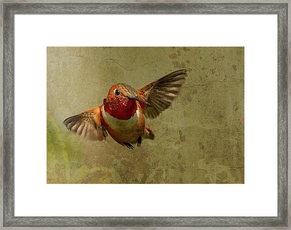 In Flight 2 Framed Print