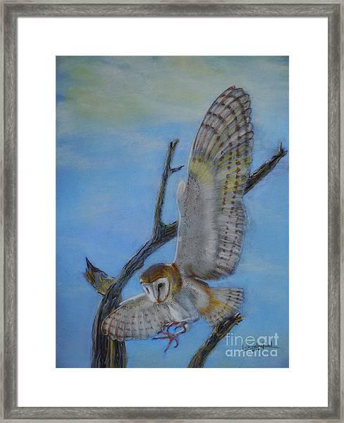 In Flight Barn Owl Framed Print