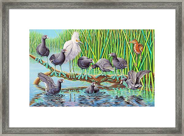 in Kahoots with Coots Framed Print