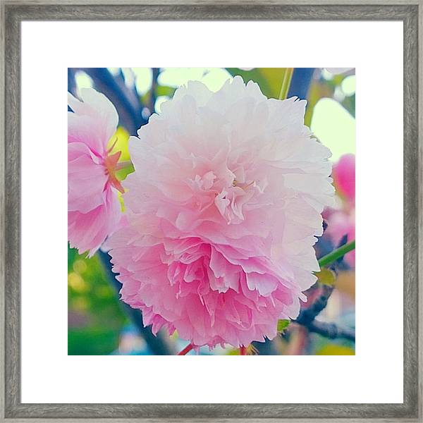 In Love With This Delicate #pink #tree Framed Print