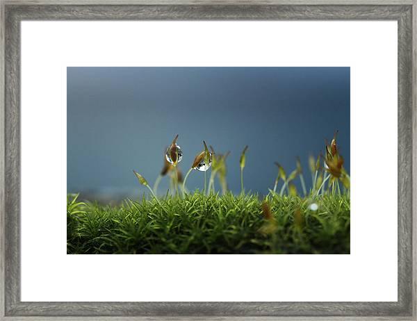 In Moss World .. Rain Framed Print