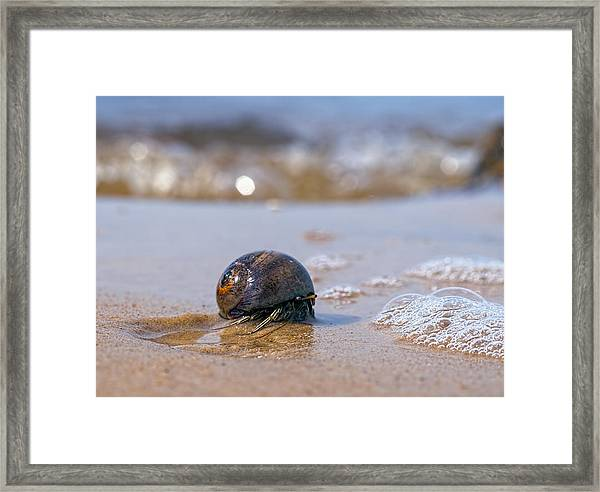 In My Way Framed Print