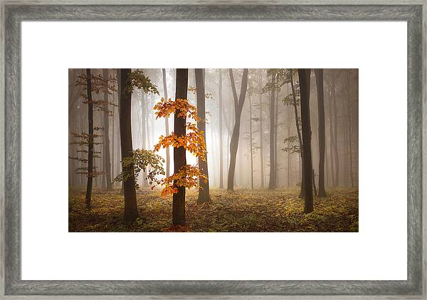 In November Light Framed Print