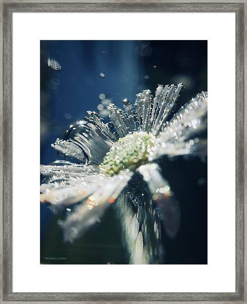 In The Big Blue Framed Print