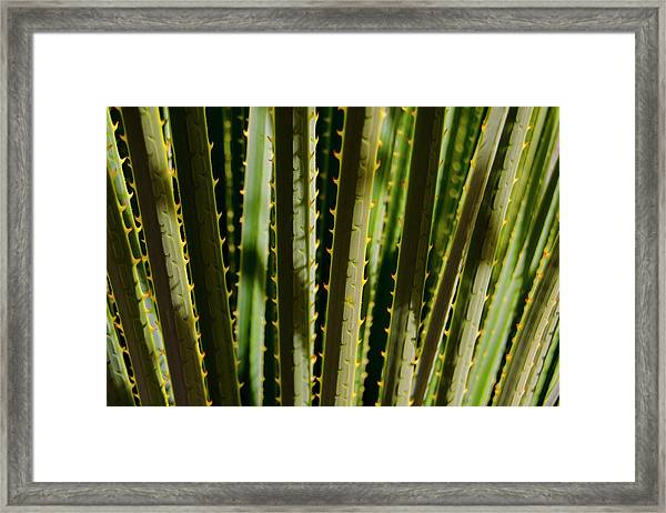 In The Cactaceae Weeds Framed Print