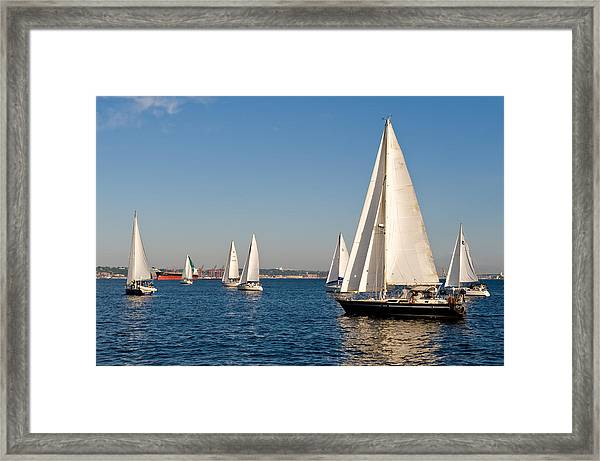 In The Hunt Framed Print by Tom Dowd