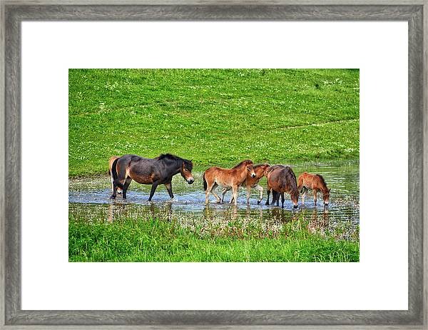 In The Puddle 2 Framed Print