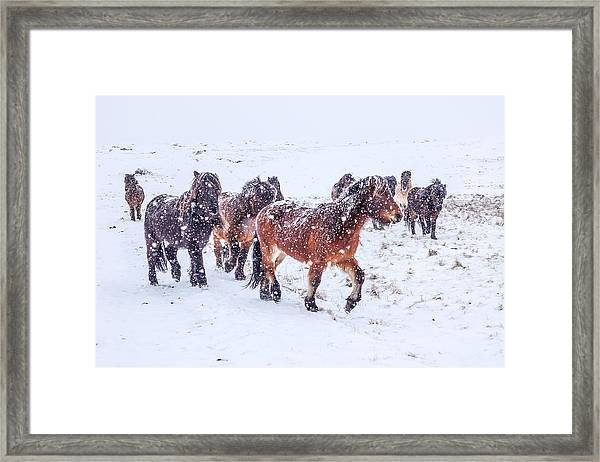 In The Storm 2 Framed Print