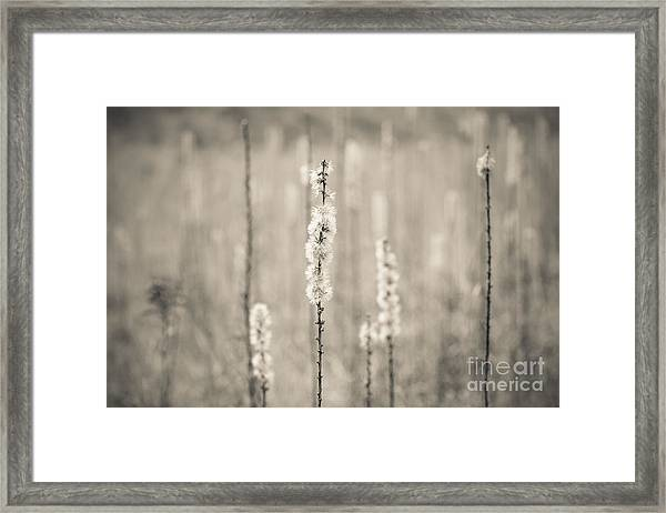 In The Wild Grass Framed Print