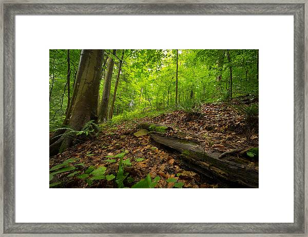 In The Woods_2 Framed Print
