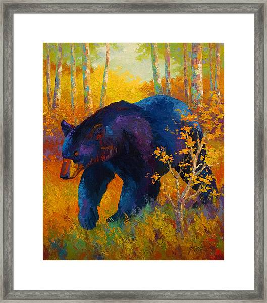 In To Spring - Black Bear Framed Print