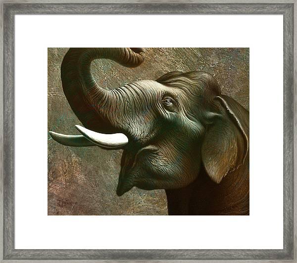 Indian Elephant 2 Framed Print