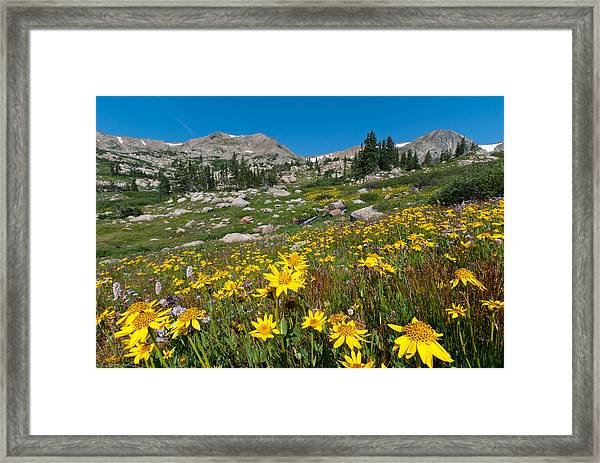Indian Peaks Summer Wildflowers Framed Print