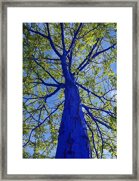 Indigo Tree Framed Print