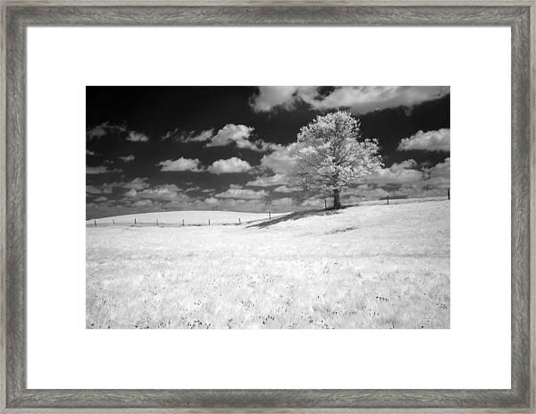 Infrared Tree Framed Print