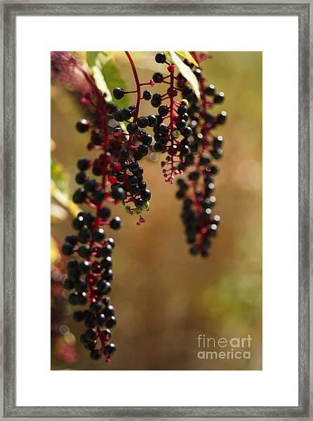 Inkberry Framed Print