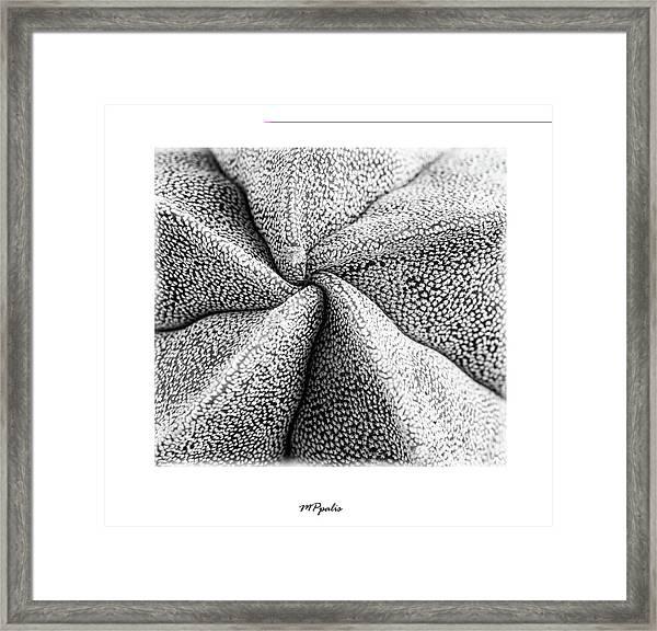 Inner Plant Details Framed Print