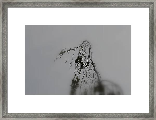 Innner  Mist Framed Print