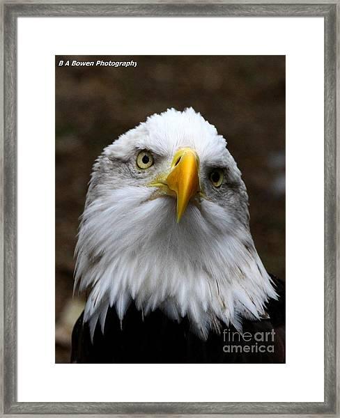 Inquisitive Eagle Framed Print