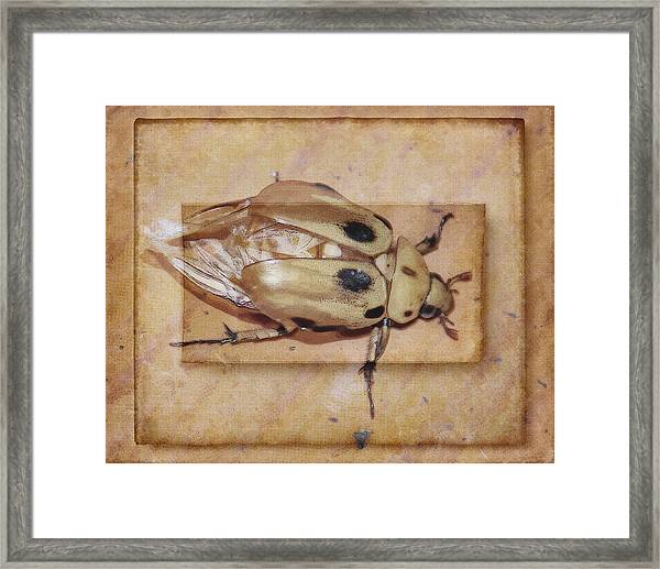 Insect On Wooden Board Framed Print