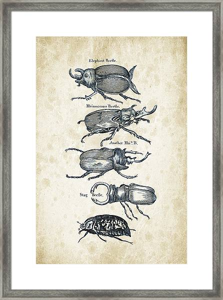 Insects - 1792 - 01 Framed Print