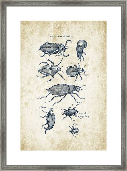 Insects - 1792 - 02 Framed Print