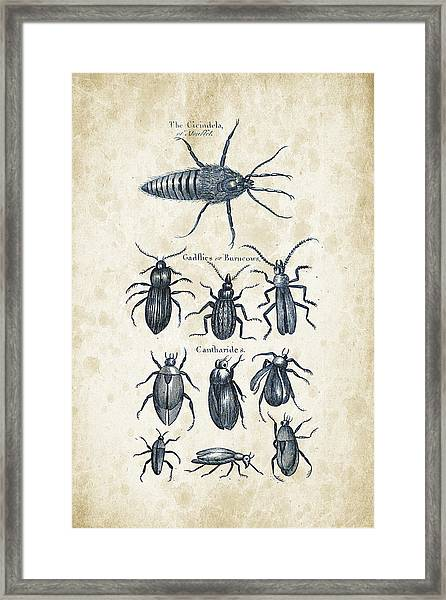Insects - 1792 - 04 Framed Print
