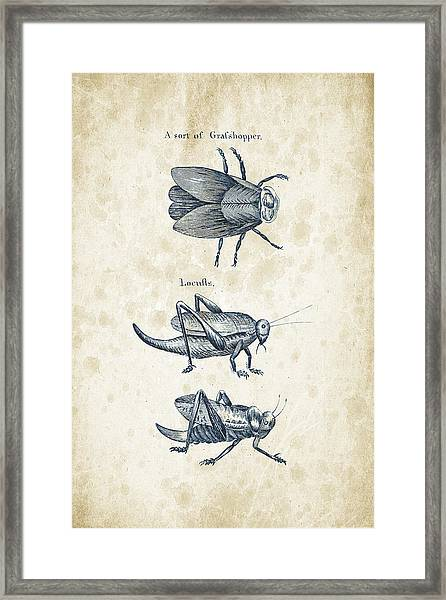Insects - 1792 - 08 Framed Print