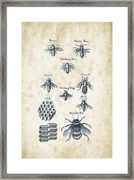Insects - 1792 - 14 Framed Print