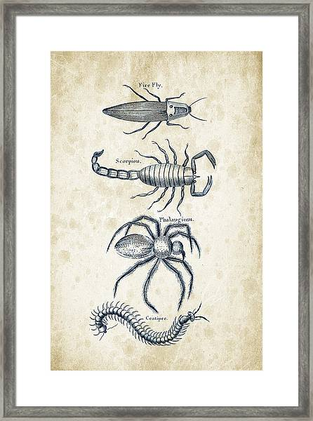 Insects - 1792 - 19 Framed Print