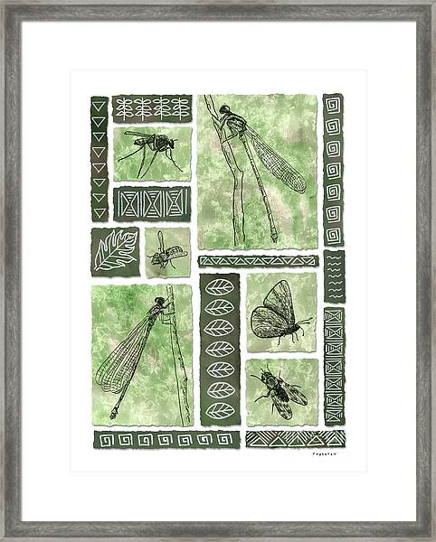 Insects Of Hawaii II Framed Print