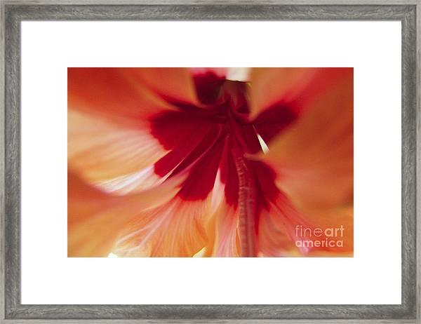 Inside Hibiscus Framed Print