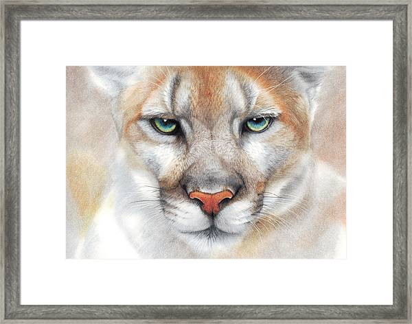 Intensity - Mountain Lion - Puma Framed Print