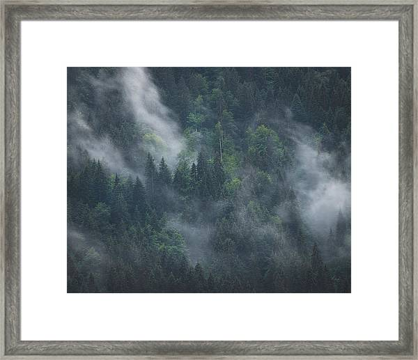 Into Deep Forest Framed Print