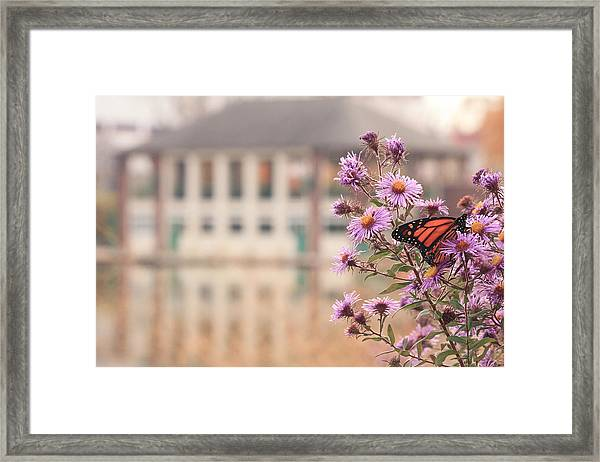 Into The Asters Framed Print