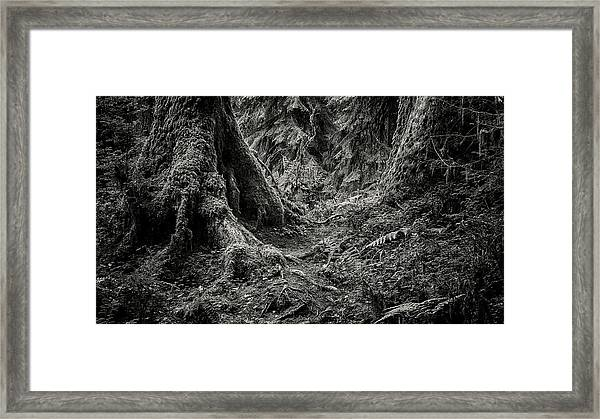 Into The Woods - Black And White Framed Print