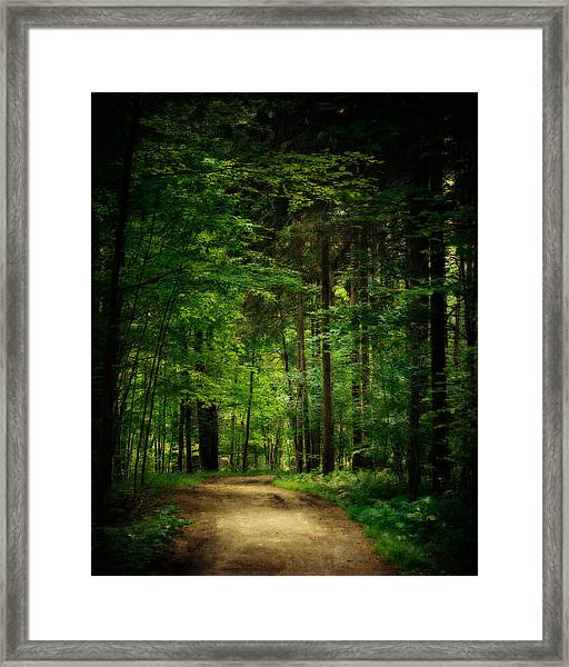 Into The Woods Framed Print