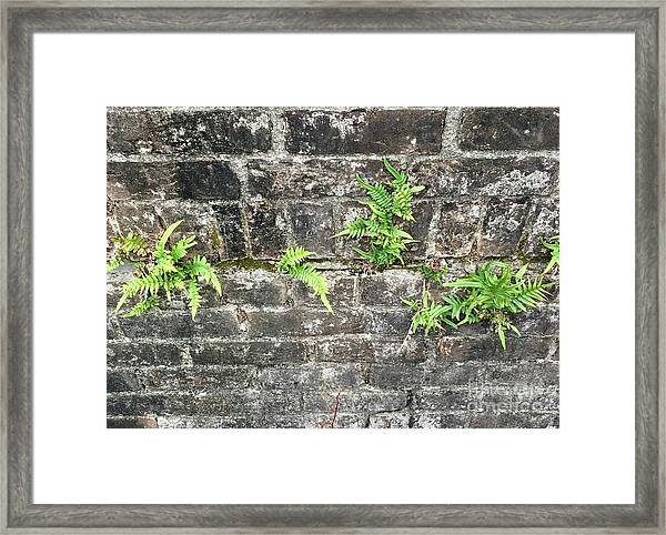 Intrepid Ferns Framed Print