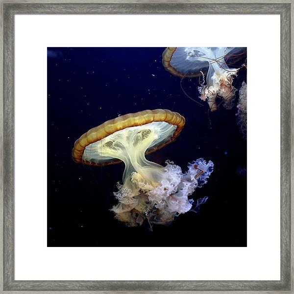 Invasion Of The Japanese Sea Nettles Framed Print