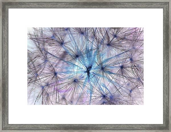 Inverted Dandelion Framed Print