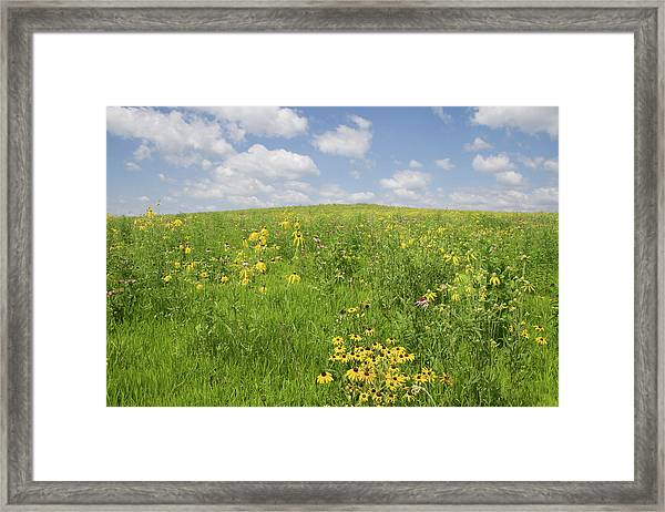 Framed Print featuring the photograph Iowa Summer Flowers I by Dylan Punke