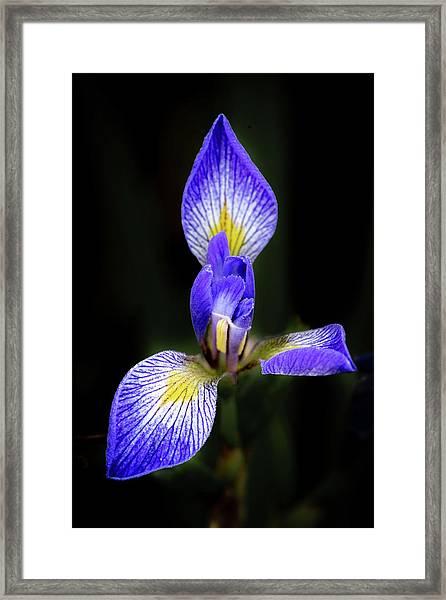 Iris #1 Framed Print