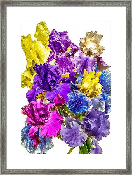 Framed Print featuring the photograph Iris Collection by CAbbottPhotography