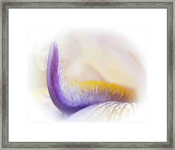 Iris Detail Framed Print