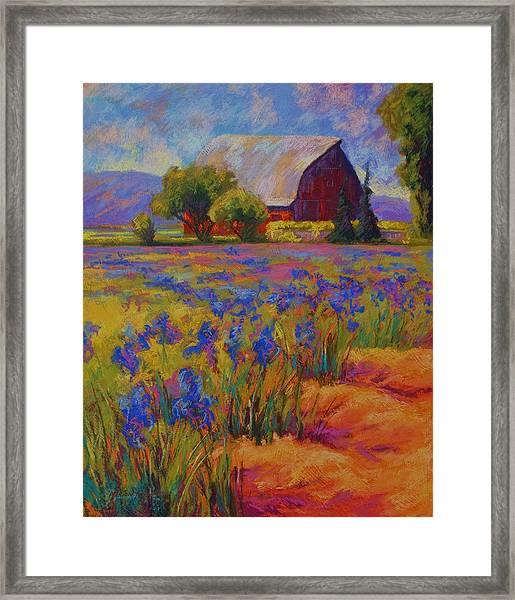 Iris Field Framed Print