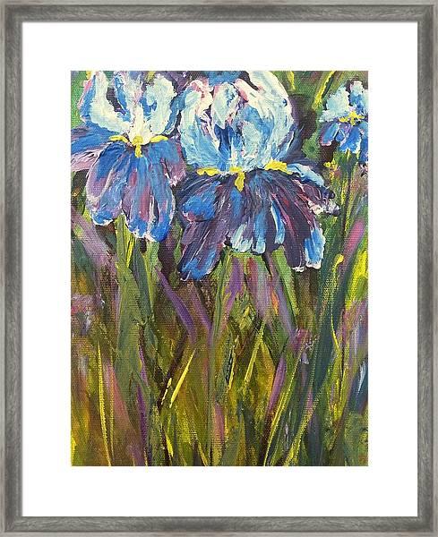 Iris Floral Garden Framed Print