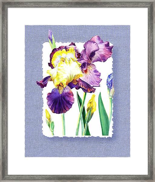 Iris Flower On Baby Blue Framed Print