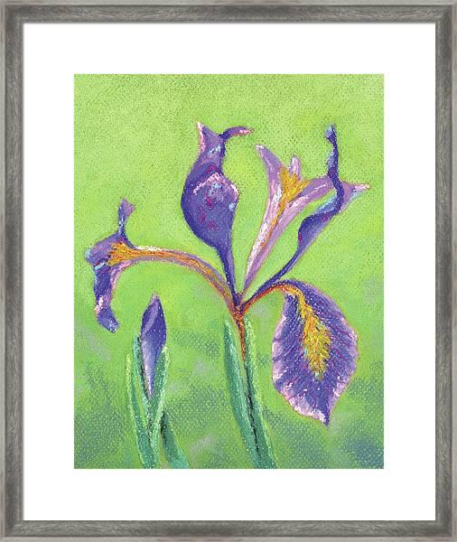 Iris For Iris Framed Print
