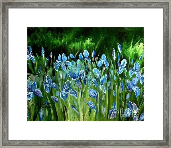 Iris Galore Framed Print